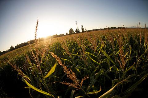 Bose Corn Maze by John Biehler, http://www.flickr.com/photos/retrocactus/3961480238/